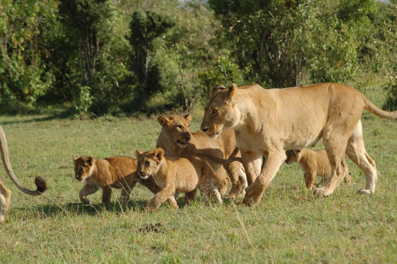 3 Days 2 Nights Flight Package Maasai Mara